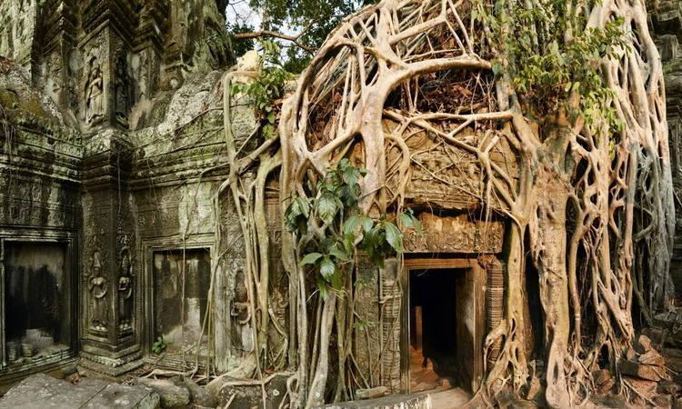 Ta Prohm Temple City Tour Siem Reap