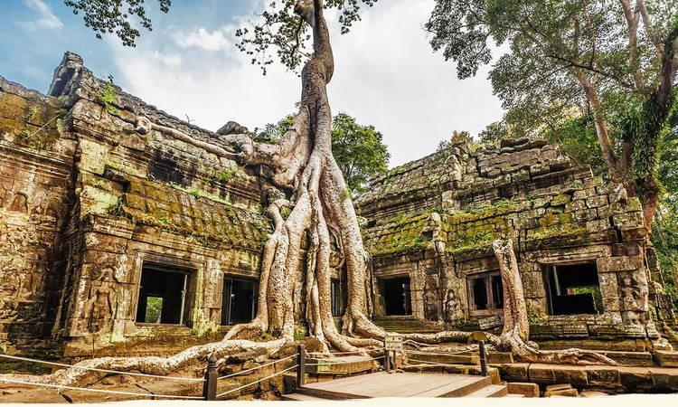 Ta Prohm Temple Tours in Cambodia